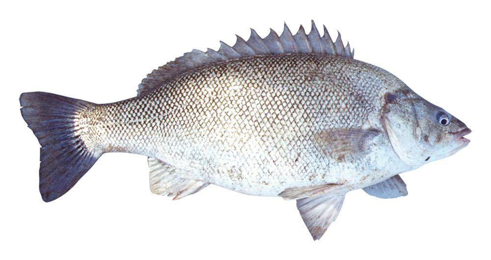 Fishing limits - PIRSA
