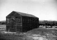 The_original_shade_house_used_for_vine_cutting_propagation_at_Nuriootpa